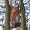 Longlife Squirrel