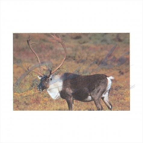 Delta Tru-Life Target Face Caribou : DT01AnimalDT01