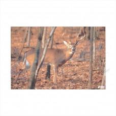 DT02 Delta Tru-Life Target Face Whitetail Deer No.101