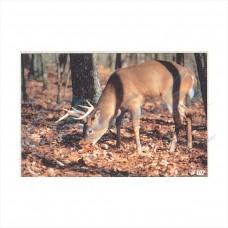 DT03 Delta Tru-Life Target Face Whitetail Deer No. 102
