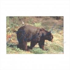 Delta Tru-Life Target Face Black Bear : DT04