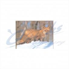 DT07 Delta Tru-Life Target Face Fox