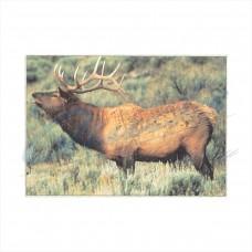 Delta Tru-Life Target Face Elk : DT09