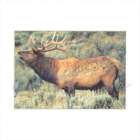 Delta Tru-Life Target Face Elk : DT09AnimalDT09