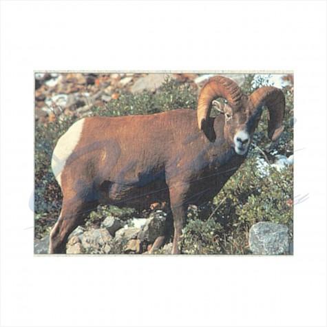 Delta Tru-Life Target Face Bighorn Sheep : DT10AnimalDT10