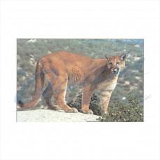 DT11 Delta Tru-Life Target Face Cougar
