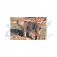 DT13 Delta Tru-Life Target Face Bobcat