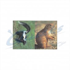 DT15 Delta Tru-Life Target Face Prairie Dog & Skunk (Single Face with both animals)