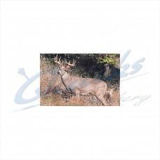 DT17 Delta Tru-Life Target Face Big Deer No.401