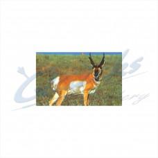DT22 Delta Tru-Life Target Face Antelope