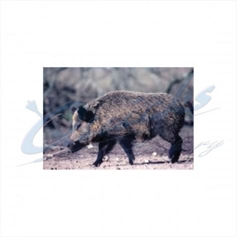 Delta Tru-Life Target Face Wild Boar : DT27AnimalDT27